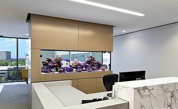 办公室装修设计中鱼缸的摆放风水鱼缸摆放大有讲究
